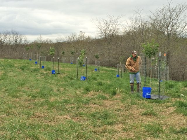 Planting Dunstan Chestnuts with Dan Perez from Whitetail Properties